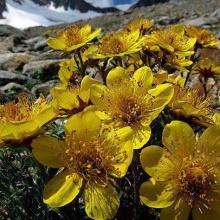 Fiori di montagna vicino Lozio
